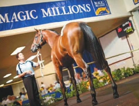 racehorse1