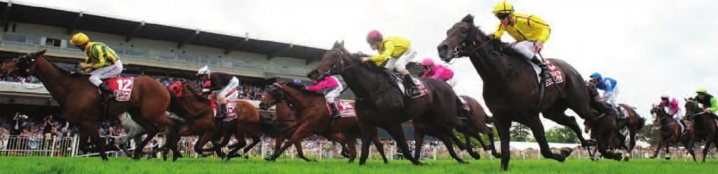 racehorse3-1024x248