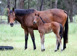 Oratorio-Southern Comfort filly