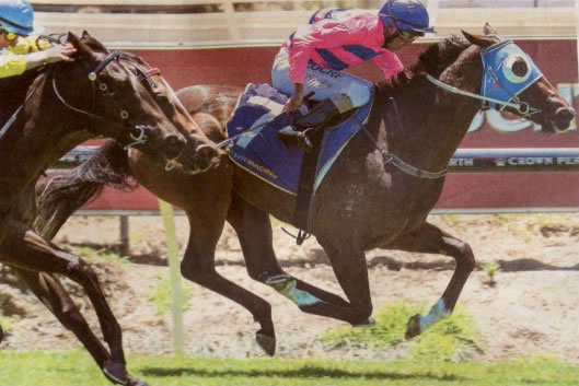 PUTRI JEWEL Demerit filly wins on debut at Ascot Photo / Western Racepix