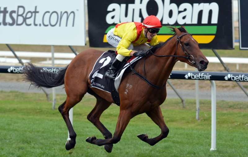 GOLD BUSKER Unbeaten Oratorio gelding wins the Gold Sovereign Stakes