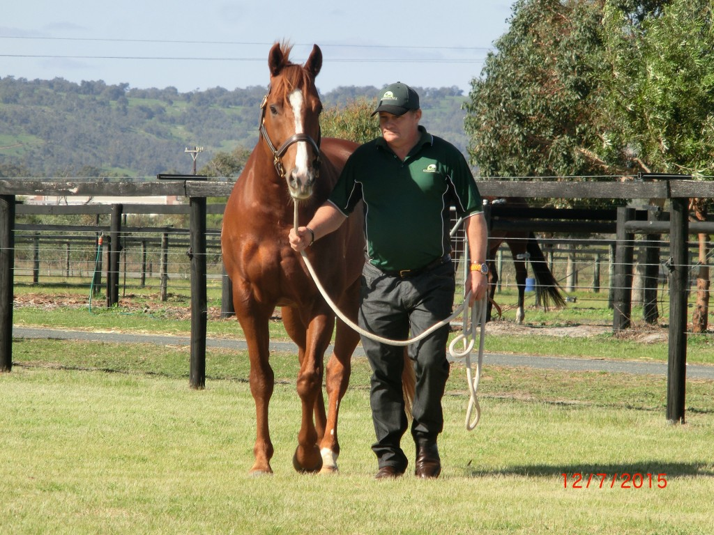 SAFEGUARDOn parade with Mogumber Park stud manager Mike Seymour-East