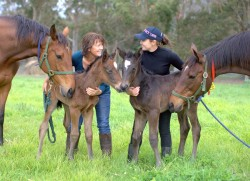Dick Turpin - Dirty Secrets Colt and Oratorio – Just As Beautiful colt