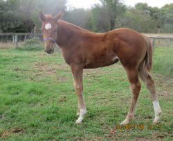 My Admiration - Highway Trader filly