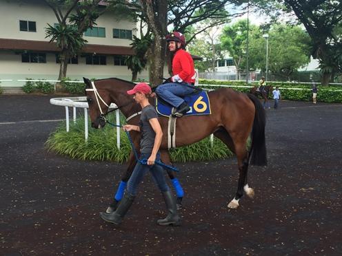 ROCKET MANChampion galloper back at Kranji