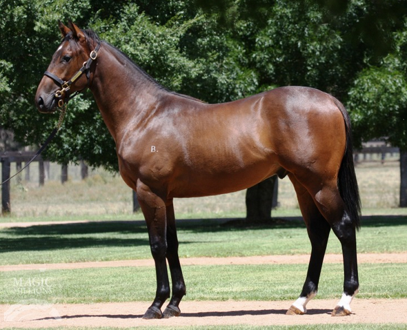 GEE ONE EXPRESSPictured as a yearling before relocating to Melbourne