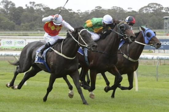 RUSHMORE Son of All American bursts down the outside to win at Bendigo