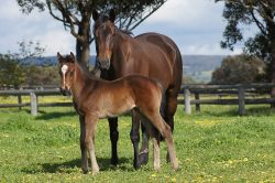 City Place - Ruby Blue Eyes filly (click to enlarge)